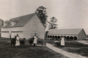 Photo: Students at the dairy barns in 1917. The student at right has barrels of milk destined for the Dining Hall.  Courtesy of Southern Arkansas University Archives, Magnolia, Arkansas.