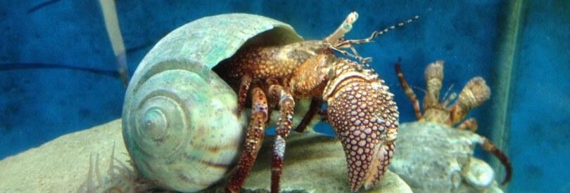 biological science marine biology academics