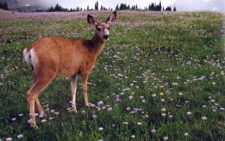 Wildlife photo presentation at SAU Jan. 28-29